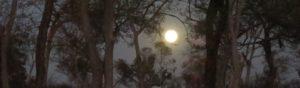 La pleine lune rayonnante en savane
